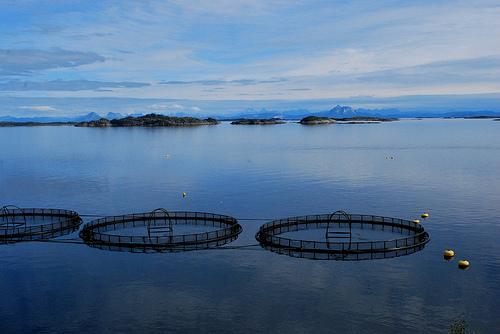 Fish Farm Protest
