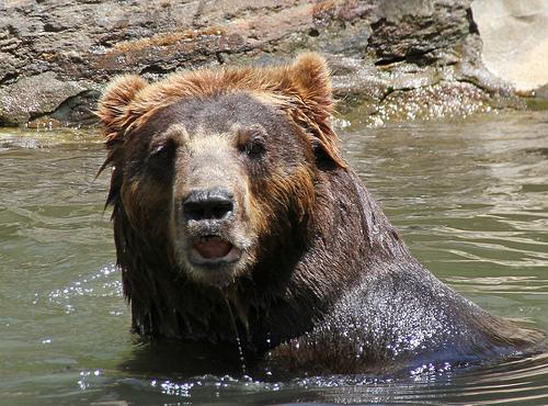 Grizzlie Hunt Ban