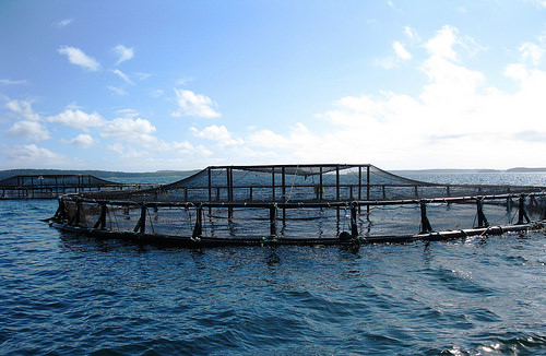 Fish Farm Report