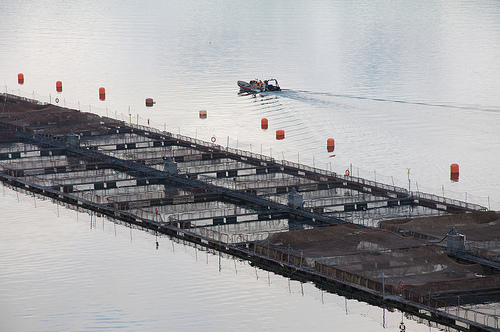 New Fish Farm Policy