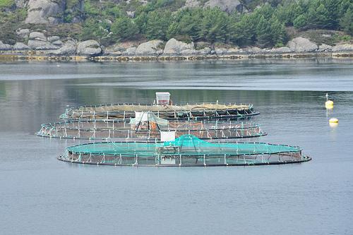 Fish Farm Tenures