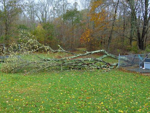 Wind Storm Batters the BC Coast