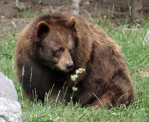 Grizzly Bear Lawsuit