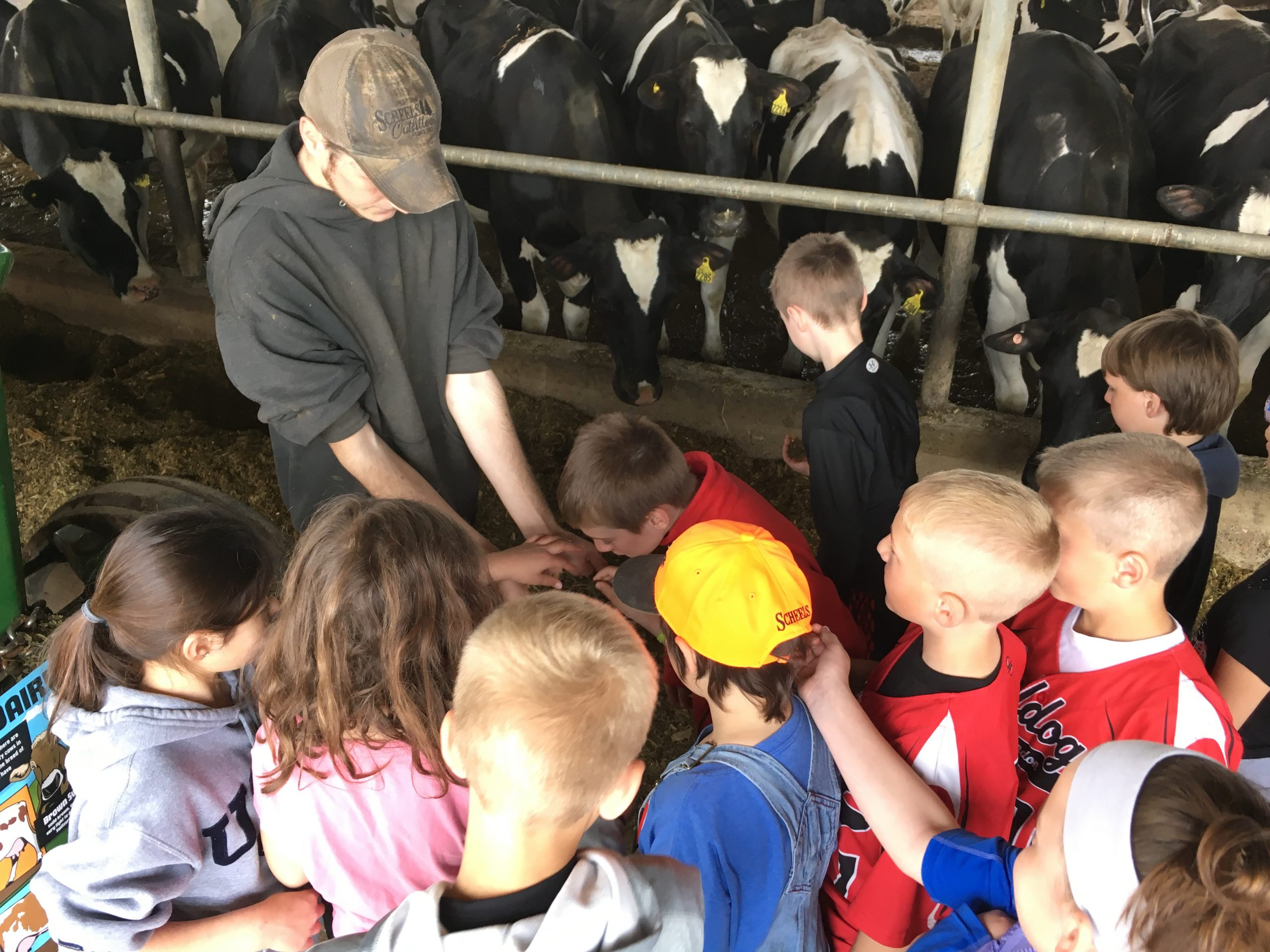 Area students receive hands-on experience of life on the farm