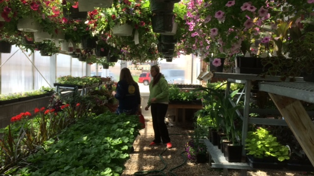 Shawano High School Green Thumbed Students Plants Ready For Sale
