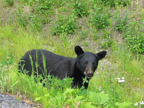 DNR tells residents to limit available food, as bear sightings remain prevalent