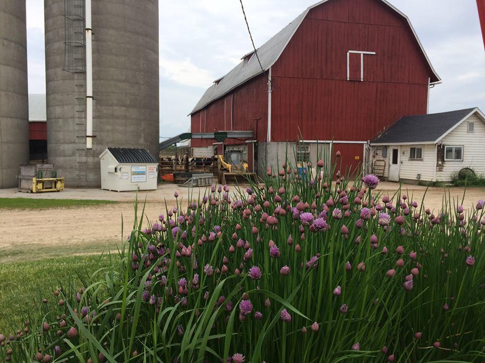 June Dairy Month Farm Stop: Zahn Farm surpasses 150-year mark