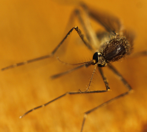 West Nile Virus Found In Shawano County