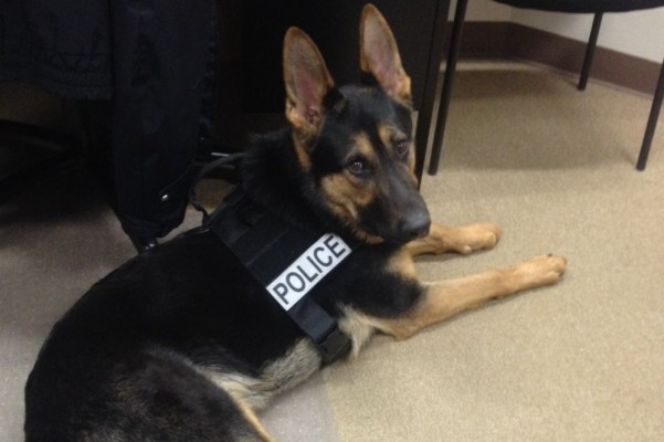 Clintonville P.D., community to honor K9 Chero after sudden passing