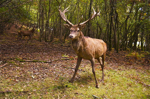 Hunters Helping DNR Track Chronic Wasting Disease