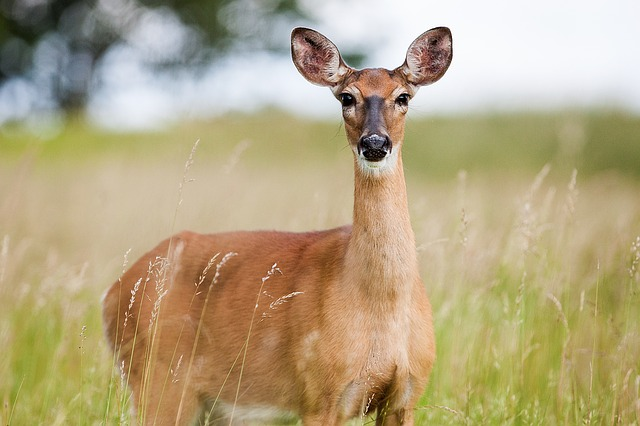 Wisconsin DOT Warns About Deer Activity