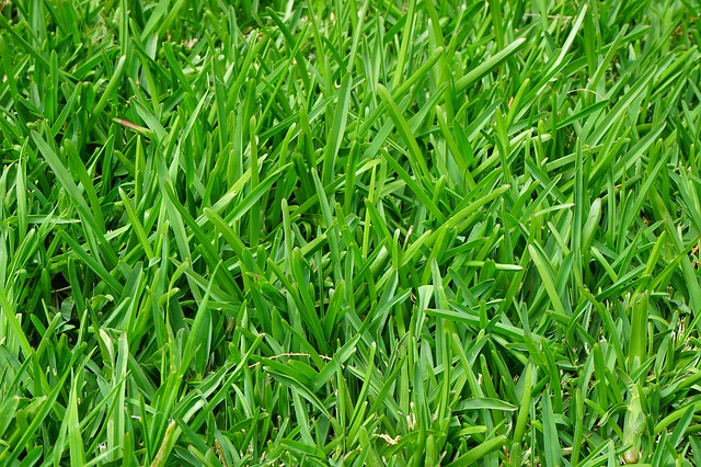 Get your Lawn Ready for Summer