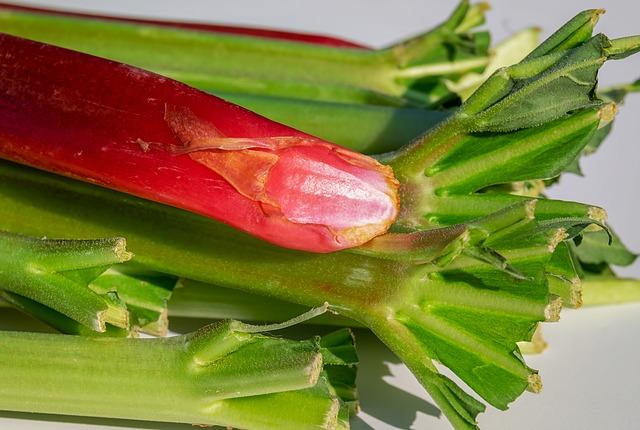 Rhubarb Festival to Celebrate Shawano's History