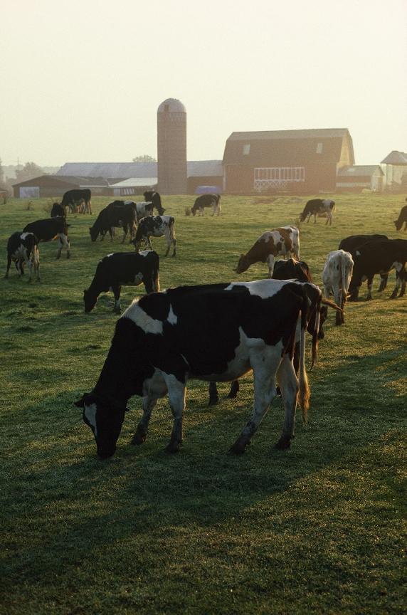 Recent Tariffs hurt Dairy Farmers