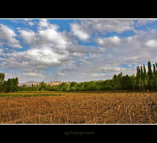 Viergutz Farms