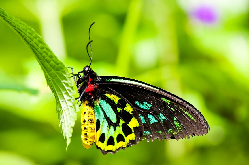 Next W.A.P. Event being held at Butterfly Garden