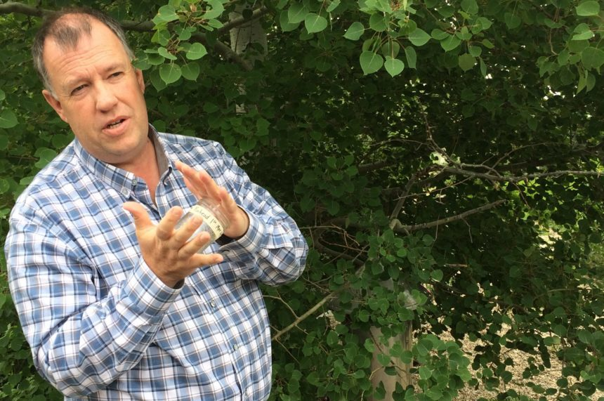 Dry weather to thank for lack of mosquitoes in Regina
