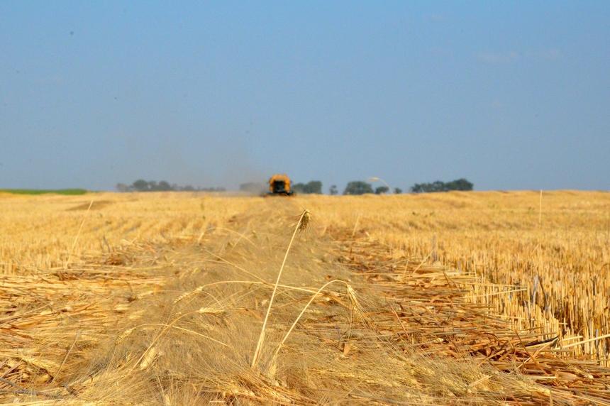 No bumper crop: Sask. farmer on dry, hot summer