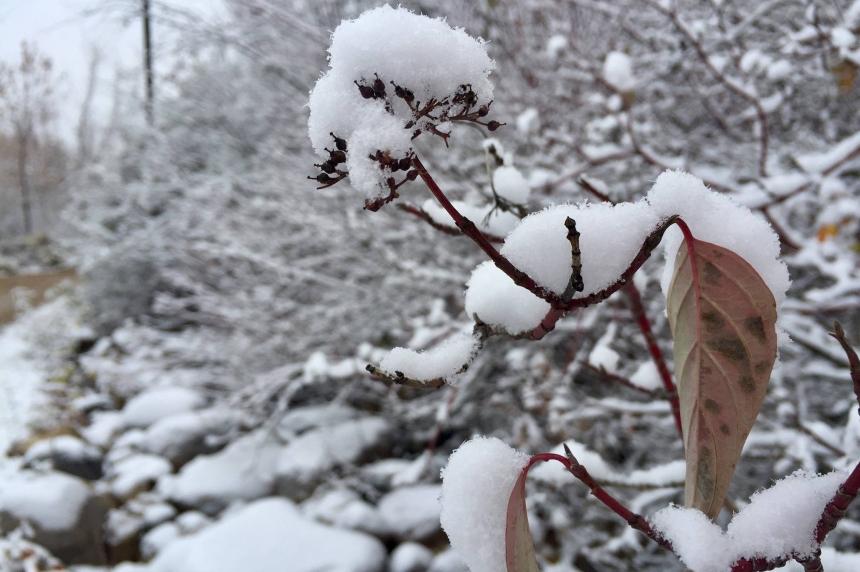 White Christmas for Saskatoon still uncertain: Environment Canada