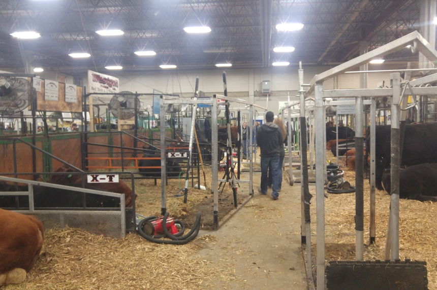 Agribition welcomes new Running of the Bulls event
