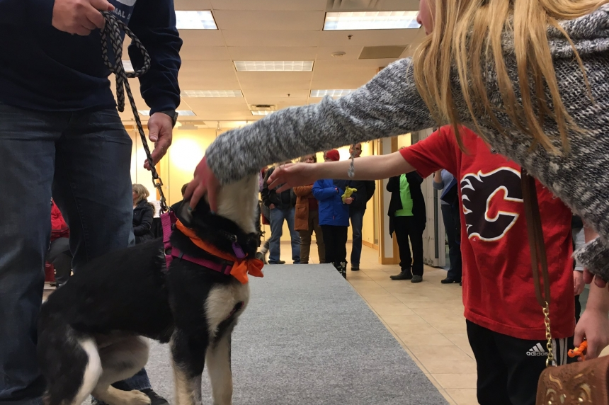 New Hope plays matchmaker with dogs