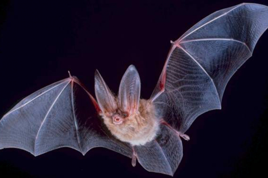 Going Batty: science centre releases bats in Wascana Park