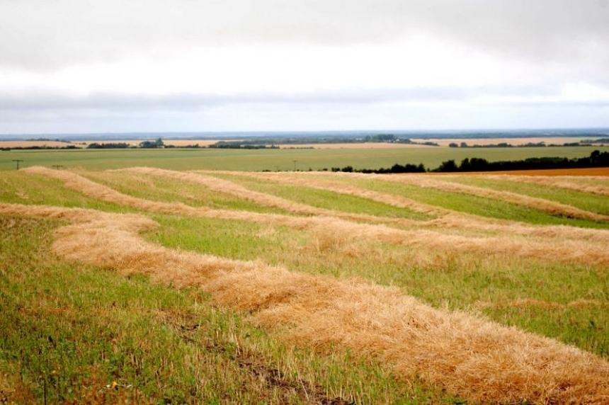 Inch of rain needed for Sask. farmers