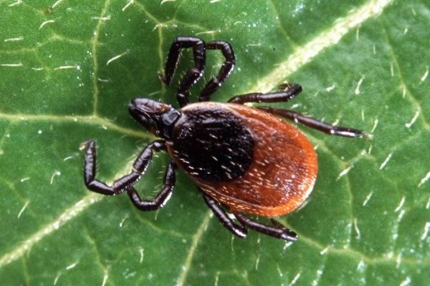 Little concern for Lyme disease in Saskatchewan