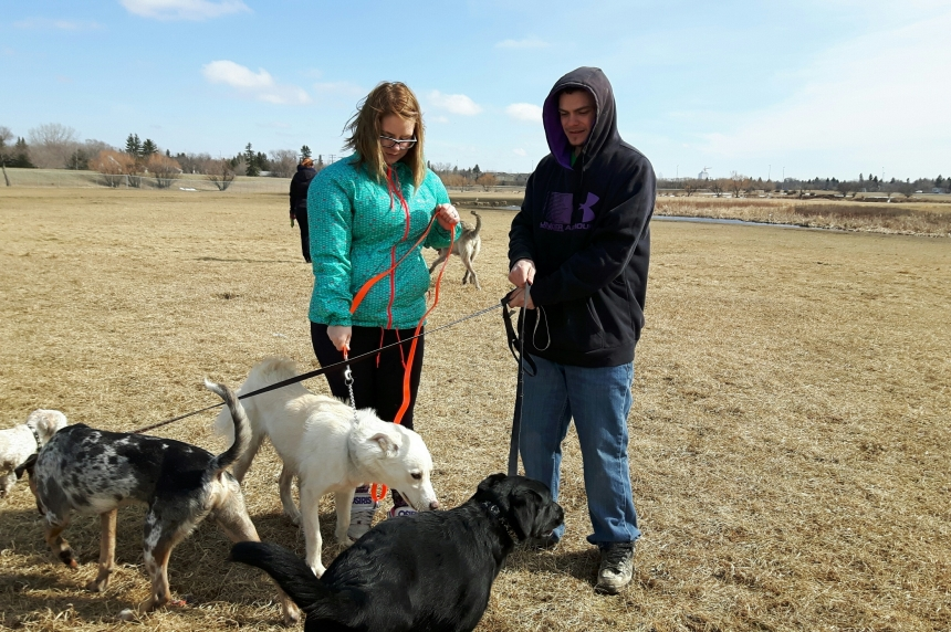 Regina city council approves new dog parks, supports LPGA event