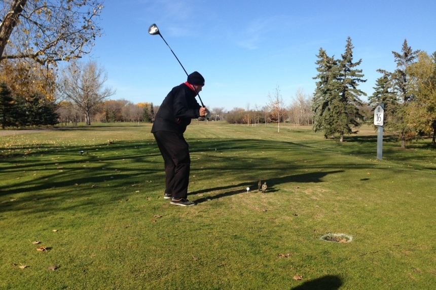 Despite recent snow, most Regina golf courses will stay open