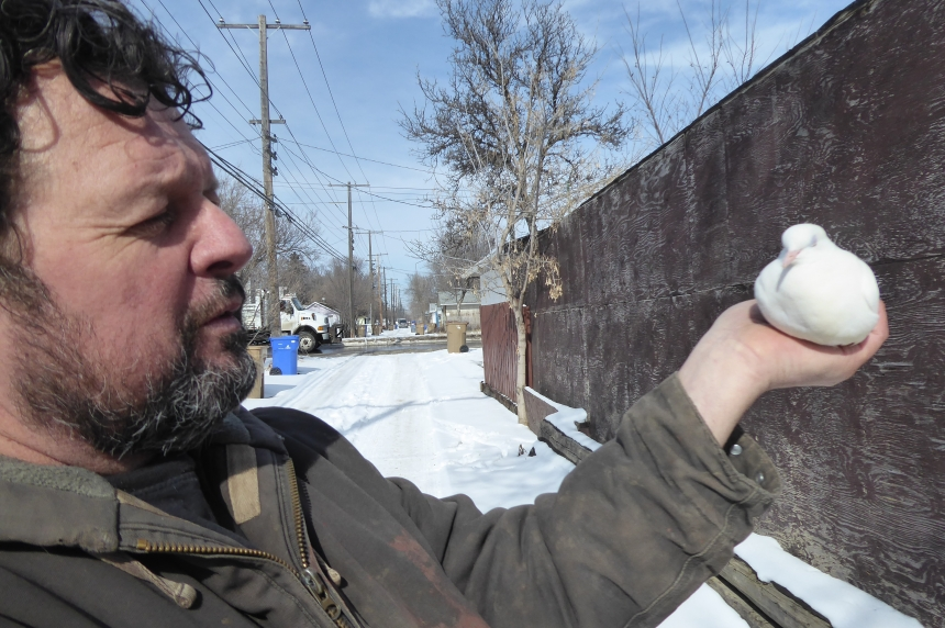 City orders dozens of pigeons to be removed from North Central home