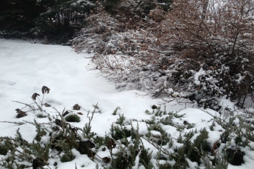 Cold, wind and snow coming to southern Sask.