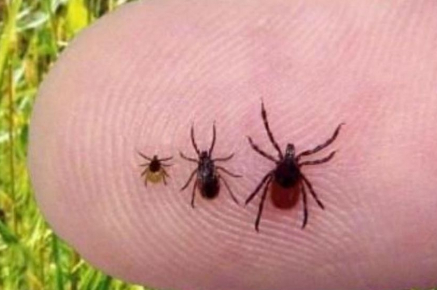 Prairie North Health region warning public about ticks carrying Lyme disease in Sask.