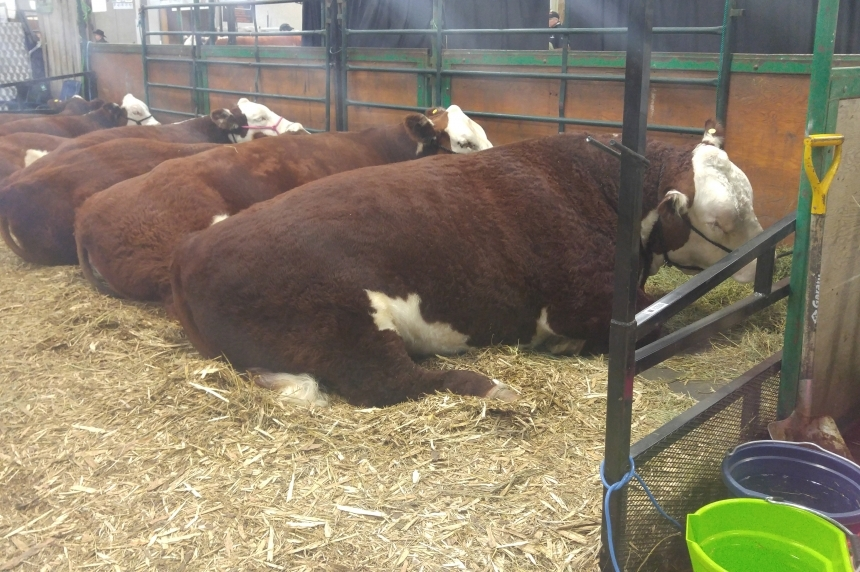 This year's Agribition expected to surpass 2015