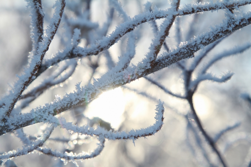 First frost arrives 3 weeks early province says