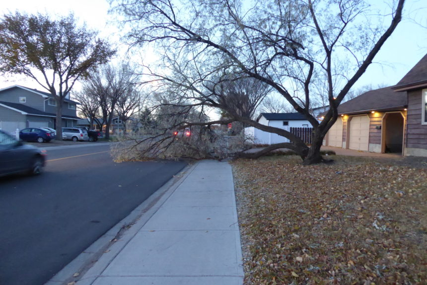 Sask. discovers damage from hurricane-force wind storm
