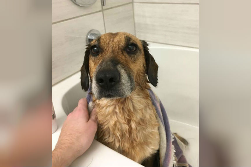 Swift Current family reunited with dog lost for 3 months