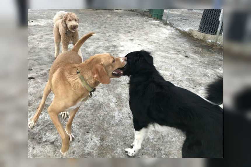 Warm weather welcomed with wagging tails