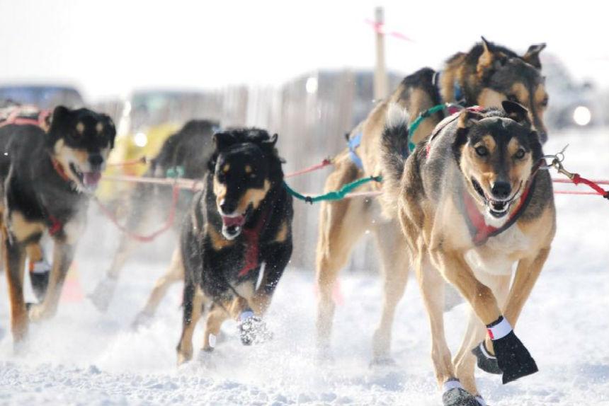 Mush: sled dog races return to Waskimo Winter Festival