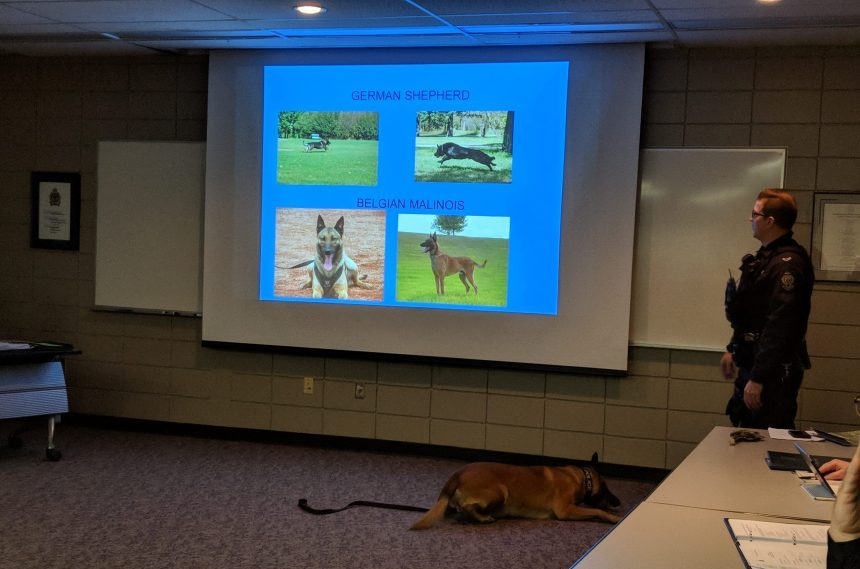 Canine unit trains to sniff out drugs and explosives
