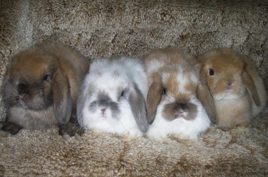 Easter all year for Sask. rabbit breeder