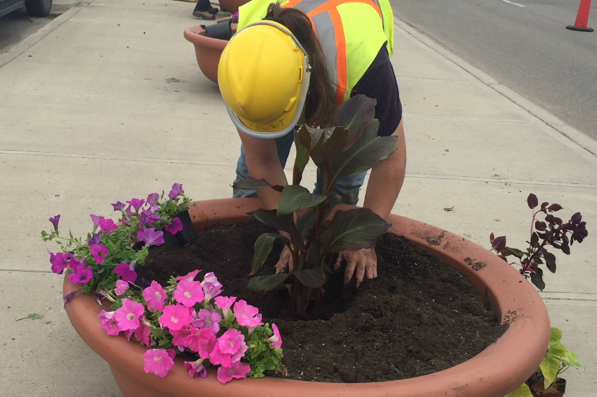 Flower frenzy: more pots planted in Regina this summer