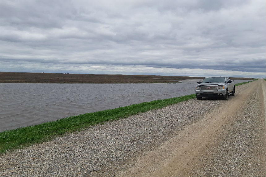Southeast Sask. crops see 'excessive' moisture: farmer