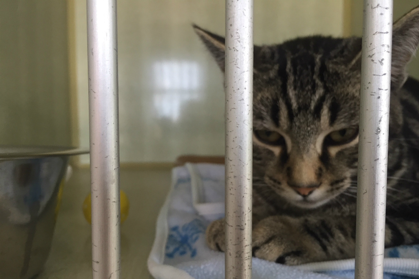 Humane Society takes cats on road trip for adoption
