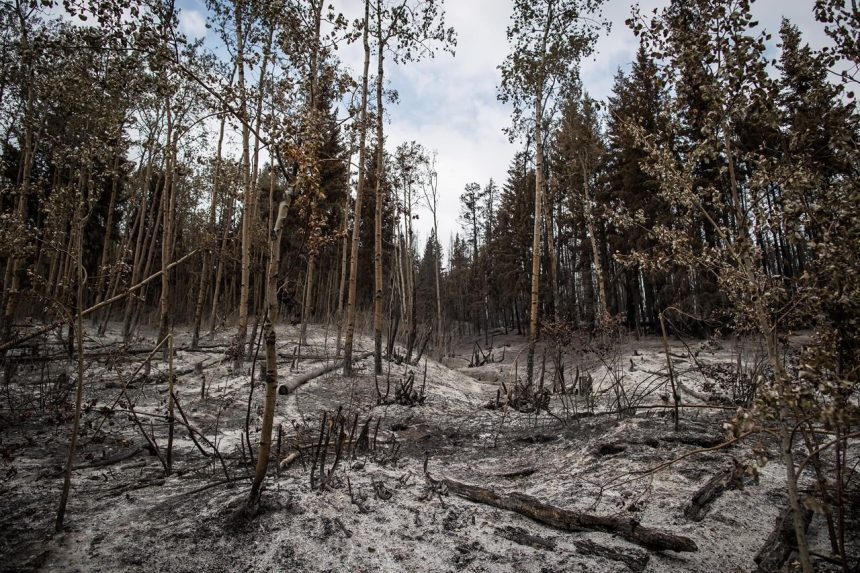 Humans responsible for more than 400 B.C. wildfires so far this season