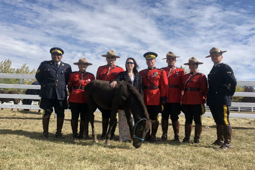 Fallen RCMP officer has Musical Ride colt named in his honour