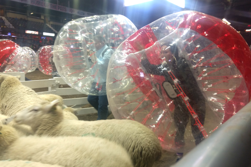 Sheep penning game proves a big hit at Agribition