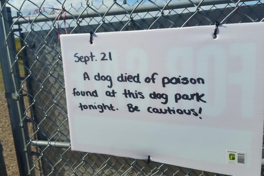 Dog allegedly poisoned in Saskatoon park