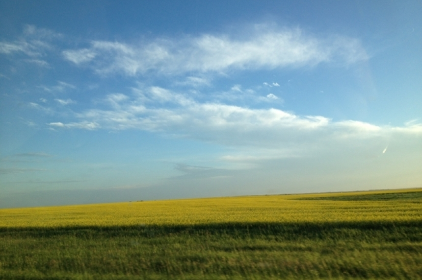 Seeding underway in Sask. despite high moisture in fields