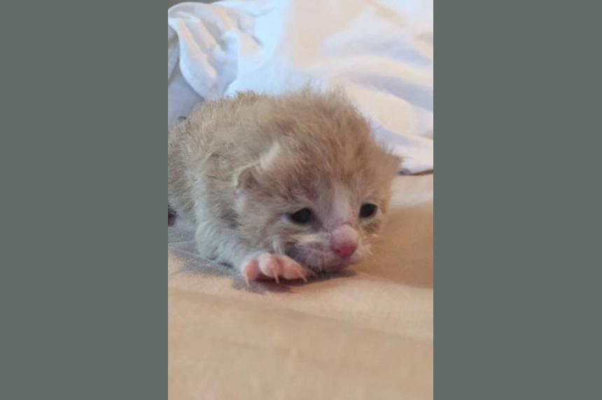 Casino kitten finds furr-ever home
